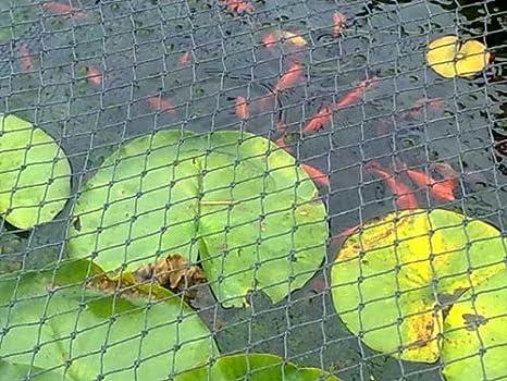 Anti Bird Netting 4 x 6mtr Rotproof: Amazon.co.uk: Garden & Outdoors