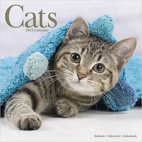 Calendars 2017-2018 Wall Calendars Cute Animals Wall Calendar Cat Calendar Cats 16 Month Wall Calendar by Avonside
