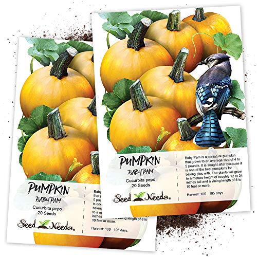 (Seed Needs, Baby Pam Pumpkin (Cucurbita Pepo) Twin Pack of 20 Seeds Each Non-GMO)