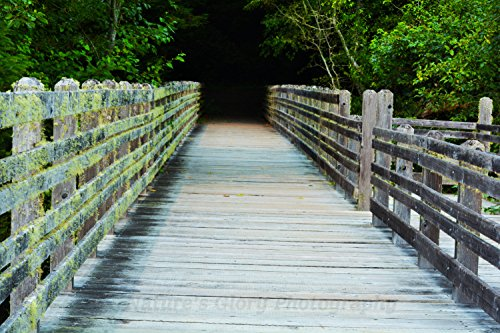 Bridge at Prairie Creek Redwoods State Park in Northern California Photo Print - 8 x 10 - Matted and Framed to 11 x 14.
