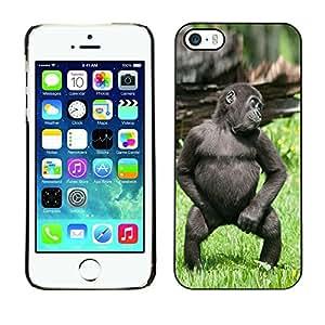 YiPhone /// Prima de resorte delgada de la cubierta del caso de Shell Armor - Cute Funny Gorilla Baby Monkey - Apple iPhone 5 / 5S