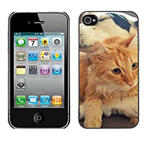 Hot Style Cell Phone PC Hard Case Cover // M00100471 friendship animals // Apple iPhone 4 4S