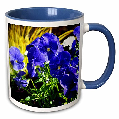 3dRose WhiteOaks Photography and Artwork - Pansy Flowers - Purple Day Dreamers Gleaming is a photo of beautiful purple pansies - 15oz Two-Tone Blue Mug (mug_214193_11) ()