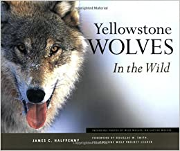 Yellowstone Wolves in the Wild by Halfpenny, James C. (June 1, 2003) 1st