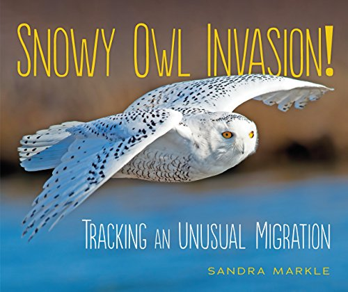 Snowy Owl Invasion!: Tracking an Unusual Migration (Gps Animals For Tracking)
