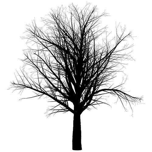(Gifts Delight Laminated 24x24 inches Poster: Tree Branch Empty Isolated Black Spooky Halloween Creepy Nature Tree Branch Silhouette Scary Seasonal Trunk Environment Autumn Winter No Leaves Bare)