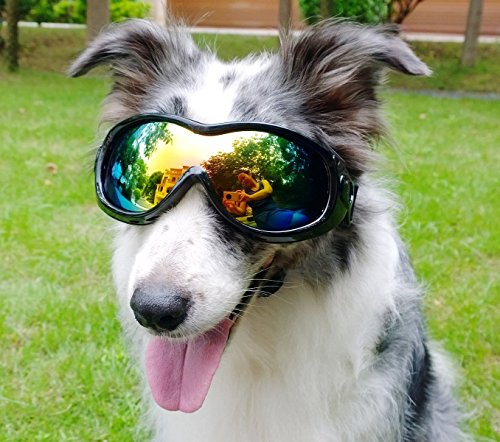 PETLESO Large Dog Anti-Fog Glasses Snow Skiing Protection Safety Goggles with Removable Starp - Goggles Molly