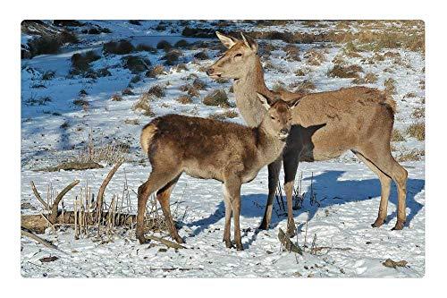 (Tree26 Indoor Floor Rug/Mat (23.6 x 15.7 Inch) - Deer Forest Fallow Deer Nature Wild Animals 2)