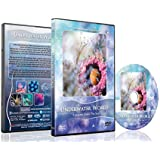 Ocean DVD - Underwater World - Nature's Unforgettable Reef Scenery of Sea Life and Marine Creatures