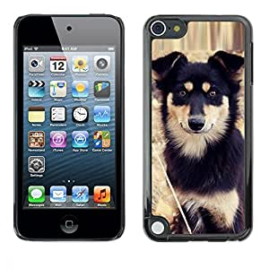 TopCaseStore / la caja del caucho duro de la cubierta de protección de la piel - Alaskan Malamute Mastiff Puppy Dog - Apple iPod Touch 5