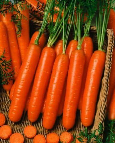 1 Oz Mini Semilla De Zanahoria Menique Zanahorias A Granel Enano Zanahoria Aprox 37 000 Amazon Es Jardin Nº de semillas por gramo: 1 oz mini semilla de zanahoria menique