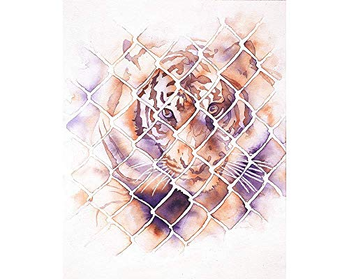 Watercolor painting of tiger looking through fence at rescue park- San Diego, CA (Print) (San Diego Fence)
