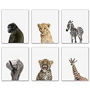 Crystal Baby Safari Animals Poster Prints - Set of 6 (8x10) Adorable Furry African Portraits Wall Art Nursery Decor - Gorilla - Elephant - Zebra - Giraffe - Leopard - Lion