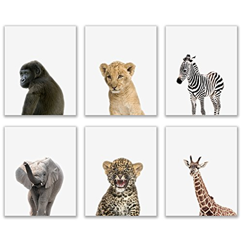 Crystal Baby Safari Animals Poster Prints - Set of 6 (8x10) Adorable Furry African Portraits Wall Art Nursery Decor - Gorilla - Elephant - Zebra - Giraffe - Leopard - Lion by Crystal