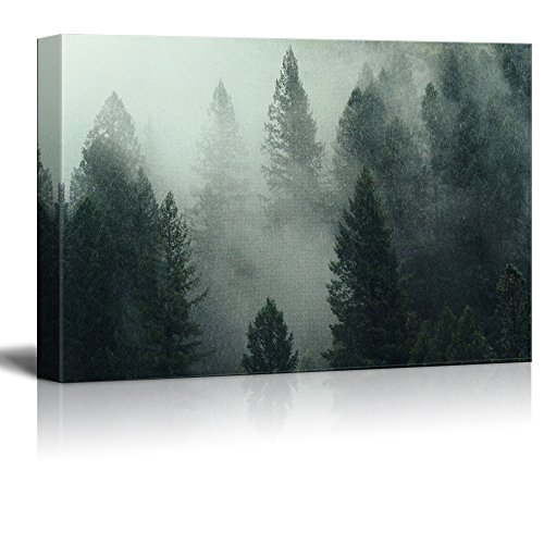 Pine Forest in the Fog Gallery