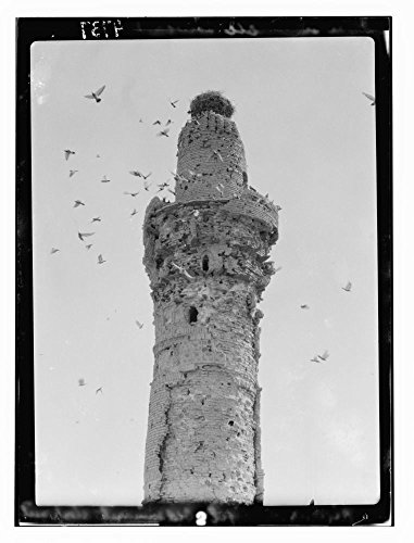 1932 Photo Kifl. Moslem [i.e, Muslim] minaret. Inhabited by countless pigeons and topped by a stork's nest Location: Alabama, Iraq, Kifl by Historic Photos