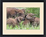 Framed Print of Africa. Tanzania. African elephants (Loxodonta africana) at Tarangire NP