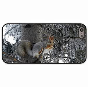 iPhone 5 5S Black Hardshell Case squirrel tree animal Desin Images Protector Back Cover