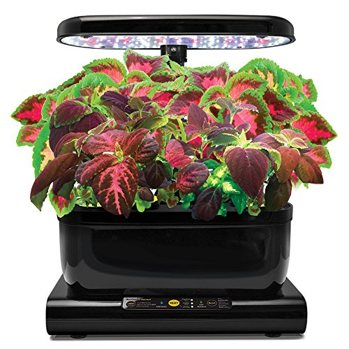 510jkamGFNL - Miracle-Gro AeroGarden Colorful Coleus Seed Pod Kit