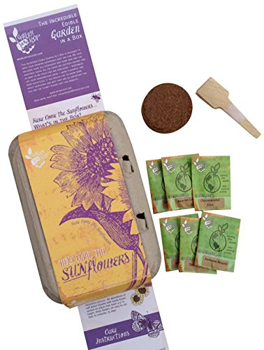 Sunflowers Heirlooom Seed Kit