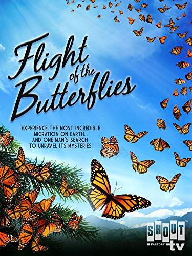 Butterfly Flight - Flight Of The Butterflies