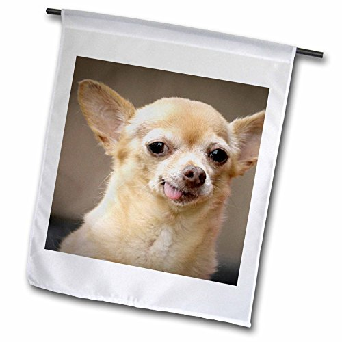 Chihuahua Dog Garden Flag - 3dRose fl_92682_1 Toothless Chihuahua Dog, Santa Fe, New Mexico-Us32 Jmr0502-Julien Mcroberts Garden Flag, 12 by 18-Inch
