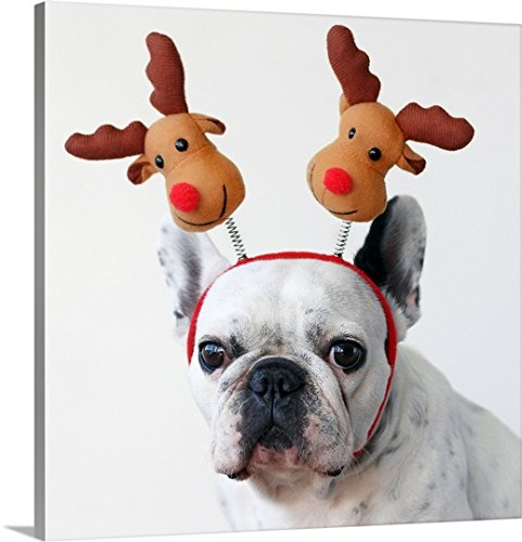 Great BIG Canvas Gallery-Wrapped Canvas entitled French bulldog wearing a reindeer (Deely Boppers)