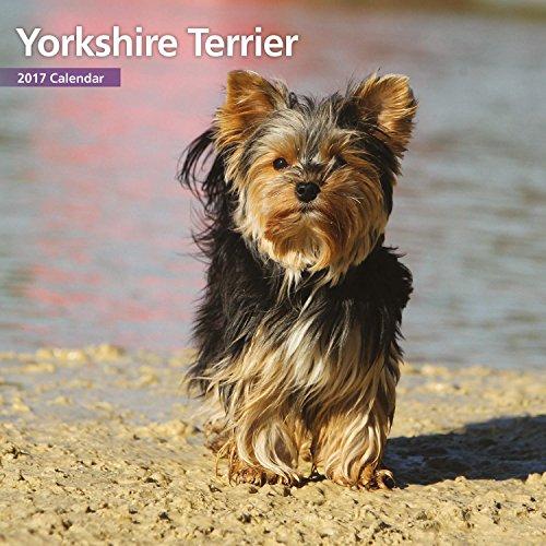 Magnet & Steel 2017 Yorkshire Terrier Calendar, Mini Calendar