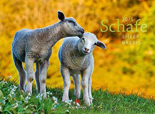 Schafe 2015