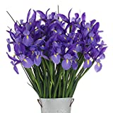 Stargazer Barn - 40 Stems of Dazzling, Blue Telstar Iris with Rustic Décor Style Galvanized Vase - Direct From Farm - 4 Dozen Iris - Sustainably Grown in California - Blue Flowers - Purple Flowers
