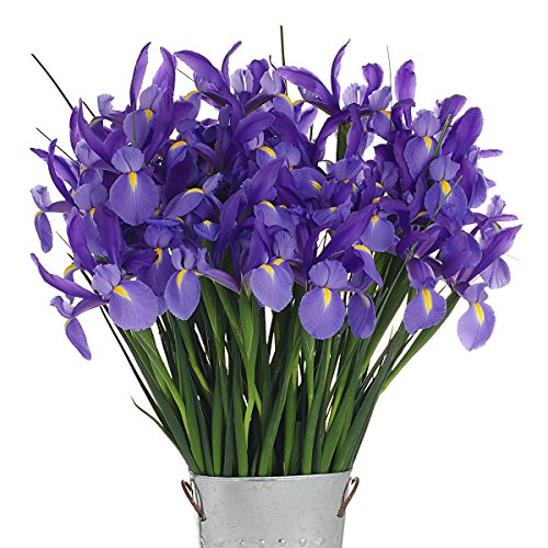 Stargazer Barn - 40 Stems of Dazzling, Blue Telstar Iris with Rustic Décor Style Galvanized Vase - Direct From Farm - 4 Dozen Iris - Sustainably Grown in California - Blue Flowers - Purple Flowers by Stargazer Barn