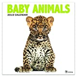 2019 Wall Calendar - 2019 Baby Animals Calendar, 12x12 Inch Monthly Calendar, Animals Theme, with 4-Month 2020 Bonus Spread