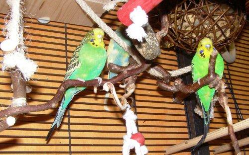 3 verschnörkelte Korkenzieher-Sitzstangen - das perfekte Vogelzubehör für Ihren Vogelkäfig