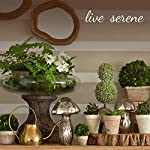 Serene-Spaces-Living-Gardenia-Spray-Pack-of-12-Measures-27-Tall-and-4-Diameter
