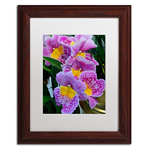 (Happy Orchids White Matte Artwork by Kurt Shaffer, 11 by 14-Inch, Wood Frame)