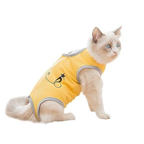 POPETPOP - Trajes de recuperación para Gatos, Gatos, Perros ...