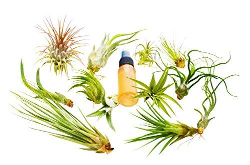 13 Pcs Tillandsia Air Plant Pack w/ Fertilizer Spray / 12 Different Species of Plants Included / Care Guide by House Plant Shop