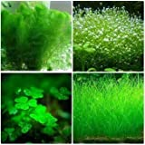 Plants fish tank aquarium grass seed plants seeds flower pots planters