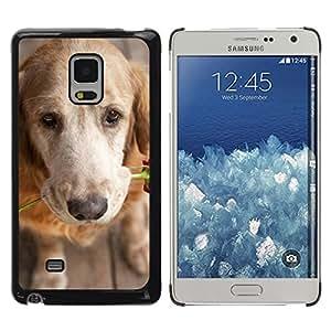 TopCaseStore / la caja del caucho duro de la cubierta de protección de la piel - Golden Retriever Love Rose - Samsung Galaxy Mega 5.8 9150 9152