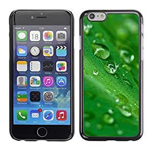 LASTONE PHONE CASE / Carcasa Funda Prima Delgada SLIM Casa Carcasa Funda Case Bandera Cover Armor Shell para Apple Iphone 6 / Green Water Drop Leaf 2