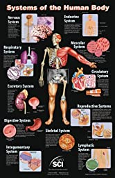Neo Sci Systems of the Human Body Laminated Poster, 23\