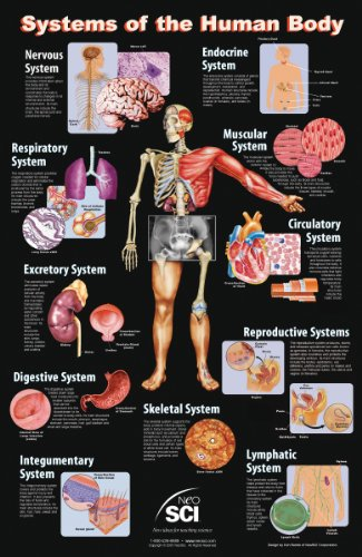 "Neo Sci Systems of the Human Body Laminated Poster, 23"" Width x 35"" Height"