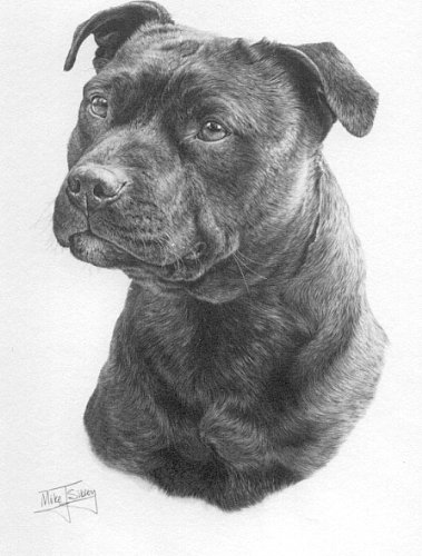 (American Staffordshire Bull Terrier Dog - Mike Sibley Open Edition Fine Art Print - 15 1/2 in x 11 1/2 in Design)