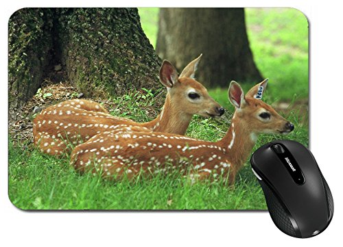 MSD Large Mouse Pad XL Extended Non-Slip Rubber Extra Large Desk Mat IMAGE ID 27335049 Resting Spotted Whitetail Deer Fawns Wisconsin (Whitetail Fawn)