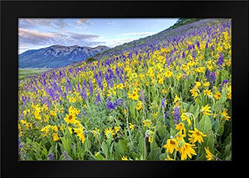 (CO, Crested Butte Flowers on Hillside Framed Art Print by Flaherty,)
