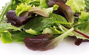 500 Gourmet Mixed Green Lettuce Seeds | Non-GMO | Fresh Garden Seeds