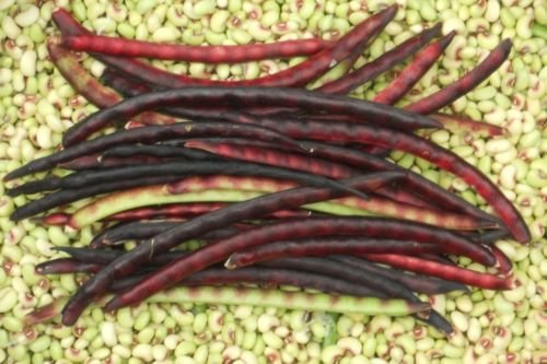(Mississippi Pinkeye 2 Purple Hull Southern Pea Cowpea Garden Vegetable Seeds)