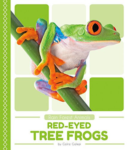 Red-eyed Tree Frogs (Rain Forest Animals)