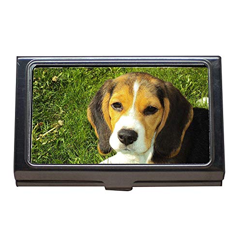 (Business Card Holder,Beagle Puppy Beagle Hound Dog Canine Purebred,Business Card Case Stainless Steel)
