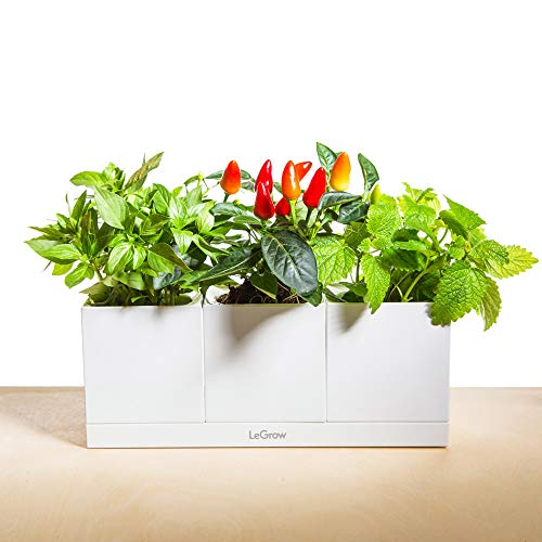 (LeGrow Self Watering Herbs Planter Plant Pots Office Green Smart Office Planters Hydroponic Home Modular Design 3 Pots Plus Base (3-Pot TG-C) - Plants Not Included)